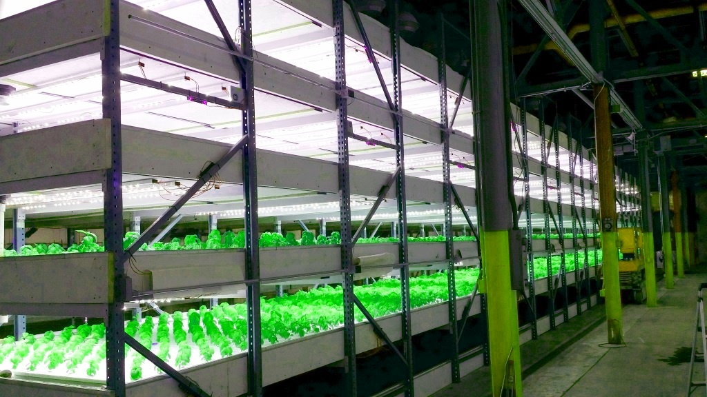 Hd Commercial Led Grow Lights