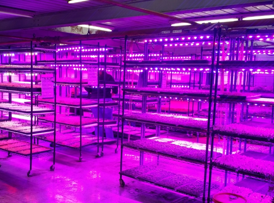 Industrial Led Grow Lights : Hd commercial led grow lights