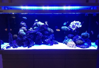 Red Sea Max LED Systems